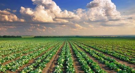 mp studio predosa terreno agricolo vendita